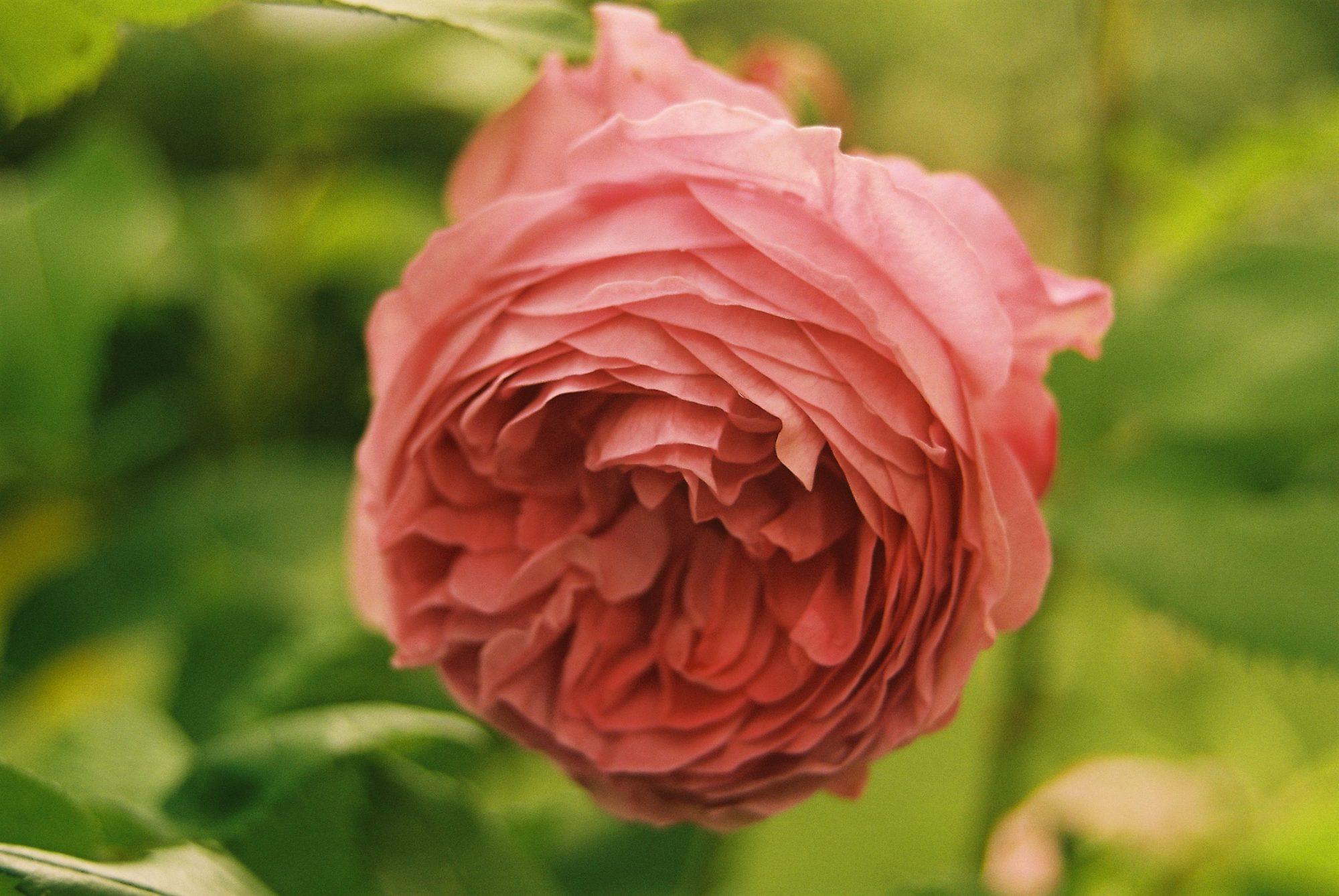 Blumen-Schulze Neuzelle
